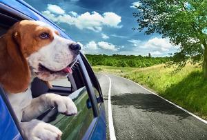 Pet Cheaufurr (Pet Taxi)