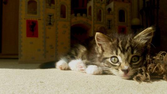 services_cat_1